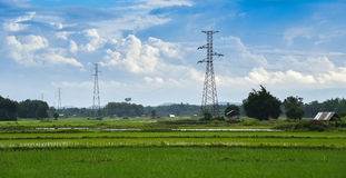 Electric pole and Rice field Royalty Free Stock Photo