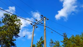 Electric poles with cables, distribution of electricity to homes and industrial estates. Equipment for power lines on the electric pole royalty free stock photos