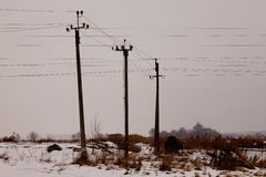 Electric poles Stock Image