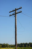Electric post power pole. Wire breakage after hurricane. Broken power line. Royalty Free Stock Photo