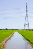 Electric post in rice field Royalty Free Stock Photography