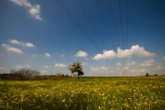Electric power lines going through stunning meadow Stock Photos