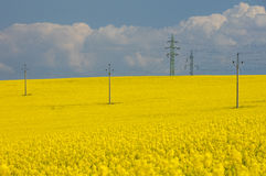 Electric rows in rapeseed field under cloudly sky Royalty Free Stock Image