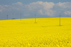Electric rows in rapeseed field under cloudly sky Stock Image