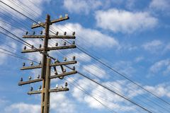 Electric and telephone cable pole Stock Photography