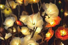Electric white flowers. Electric white and red flowers for interior home design with golden light stock photography