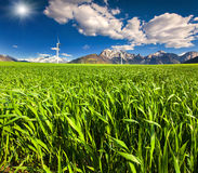 Electric wind turbines in the field of winter wheat Royalty Free Stock Photo