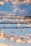 Electric wires at sunset as an background. Electric wires at sunset as an abstract background Stock Photo