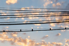 Electric wires at sunset as an background. Electric wires at sunset as an abstract background Royalty Free Stock Images