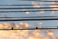 Electric wires at sunset as an background. Electric wires at sunset as an abstract background Royalty Free Stock Image