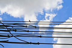 Electric wires. Electric wire and bird, against a blue sky background Royalty Free Stock Photo