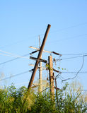 Electrical bamboo post with power line cables Stock Images