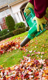 Electrical Blower Cleaning Leaves from Front Yard during Autumn. Vertical photo of electrical blower, gloved hands holding, cleaning leaves from front yard with Stock Images