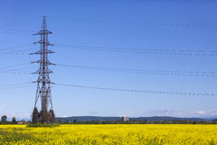 Electrical net of poles on blue sky and meadow Royalty Free Stock Photo