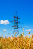 Electrical powerlines and wheat field in summer day Stock Photo