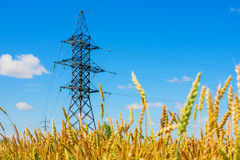 Electrical powerlines and wheat field in summer day Royalty Free Stock Image