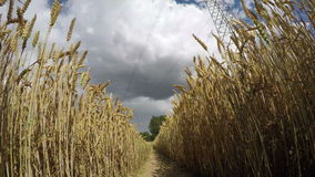 Electrical pylon through wheat, time lapse 4K stock video footage