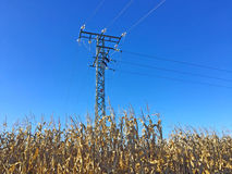 Electrical tower on a corn field Royalty Free Stock Photos