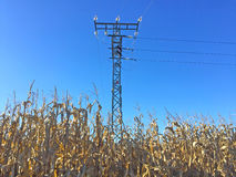 Electrical tower on a corn field Royalty Free Stock Image