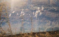Double Exposure of Pylon and field Herbs Royalty Free Stock Photos