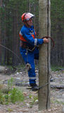 Electrician begins to climb on a power pole Stock Images