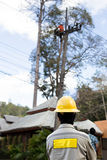 Electrician lineman repairman worker on electric post power pole Stock Photo