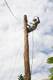 Electrician lineman Royalty Free Stock Images