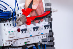 Electrician at work. With a plant Stock Photos