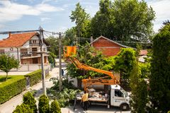Electrician workers cutting branches which interferers wire for the electricity. In Kragujevac, Serbia stock image