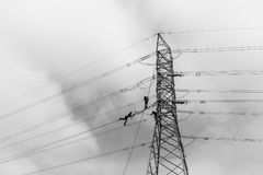 Electricians Hanging Tower Power Cables Black White. Electricians hanging on steel cables high above ground working on electrical cable power lines on steel stock photos
