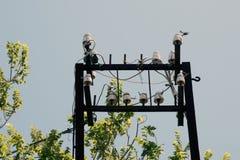 Electricidad en Cerdeña, Italia foto de archivo