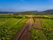Electricidad entre campo del arroz Imagen de archivo libre de regalías