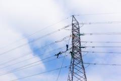 Electricistas que cuelgan líneas eléctricas de la torre Imagenes de archivo