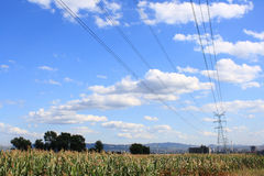 Electricity and Corn Royalty Free Stock Image