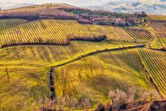 Electricity distribution line in cultivated fields. View of electricity distribution line on vineyards and cultivated fields in badlands in Italian countryside royalty free stock photography