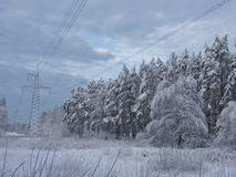 Electricity line in winter. Electricity line going through snowy forest Stock Photos