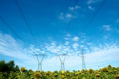 Electricity and nature. Electric pylon over a sunflower field Stock Image