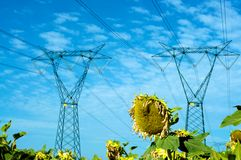 Electricity and nature. Electric pylon over a sunflower field Royalty Free Stock Photos