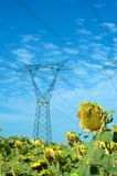 Electricity and nature. Electric pylon over a sunflower field Royalty Free Stock Images