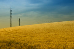 Electricity from the nature. Power-transmission poles are growing from the grain field Stock Photography