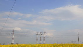 Electricity pillars on yellow flowers field stock video footage