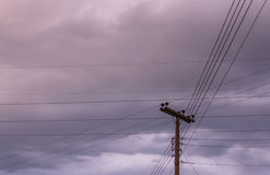Electricity pole and lines. Stock Photo