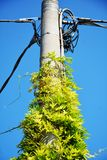 Electricity pole with plants Stock Photo