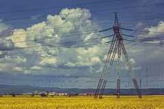 Electricity pole in rapeseed field Stock Images