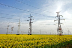 Electricity poles. On a filed with yellow flowers stock photo