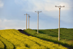 Electricity poles in an agricultural field Stock Image
