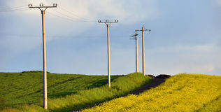 Electricity poles in an agricultural field Royalty Free Stock Image