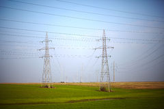 Electricity poles on a meadow Royalty Free Stock Image