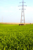 Electricity poles on a meadow Stock Photo