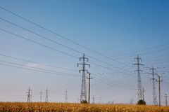 Electricity poles on a meadow Royalty Free Stock Photo